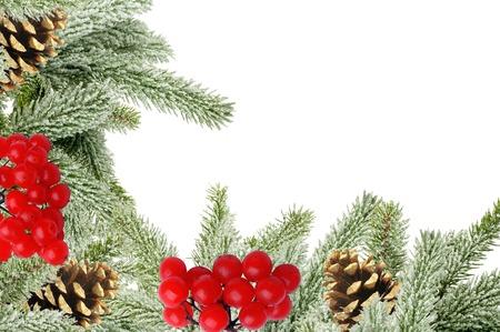 rowan tree: Green Christmas tree with cones and rowan isolated on white