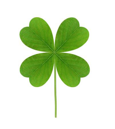 four leafed: Leaf of clover isolated on white background