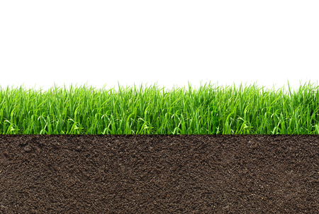 grow: green grass with in soil isolated on white background
