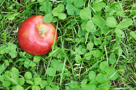 red clover: red apple in green clover grass