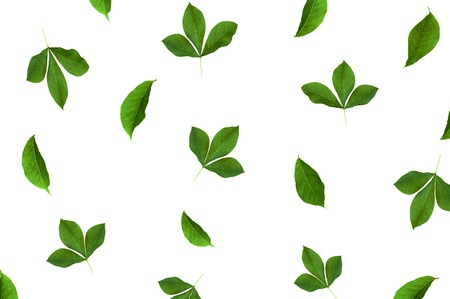 bloggers: Pattern with green leaves at white background. Flat lay, top view composition for bloggers, magazines, social media and artists