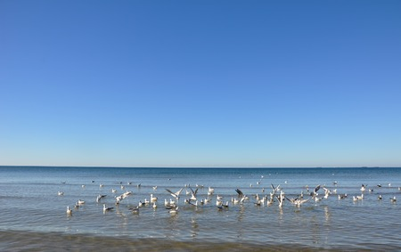 collisions: Hungry gulls circling over the winter beach in search of food on a background of sea and blue sky