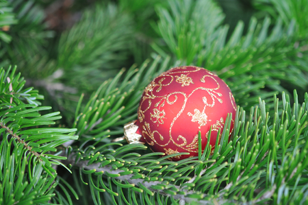 Closeup of Green Christmas tree red ball decorations