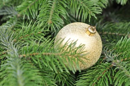 glitter ball: Closeup of Green Christmas tree and Gold Glitter Ball decorations Stock Photo