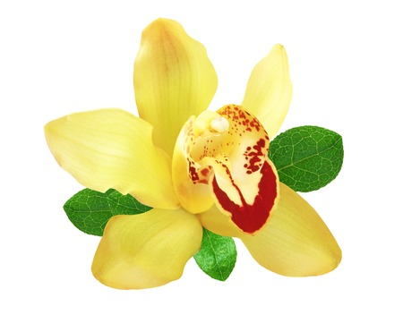 Yellow orchid with green leaves isolated on white Stock Photo