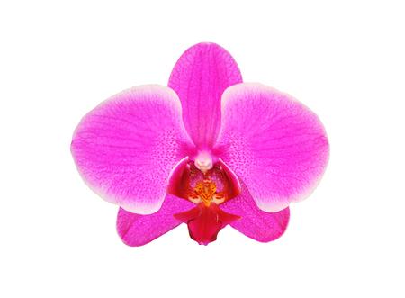 Beautiful flower Orchid, pink phalaenopsis close-up isolated on white background Stock Photo