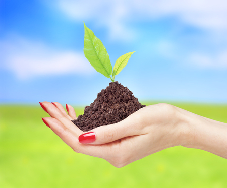 womans hands are holding green plant over bright nature background