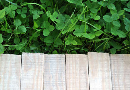 green clover grass and wooden planks