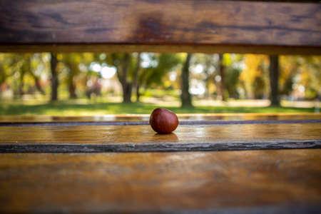 Chestnut on a bench.