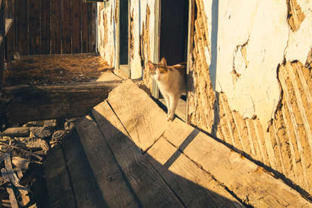 cat in an abandoned old house