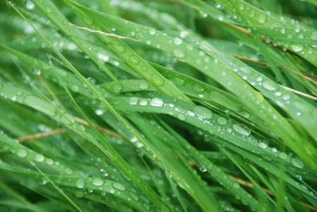 wet grass background Stock Photo - 989740