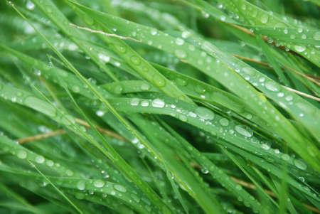 wet grass background Stock Photo - 989740