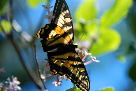 admiral: admiral butterfly Stock Photo