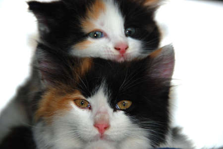 two young cats Stock Photo