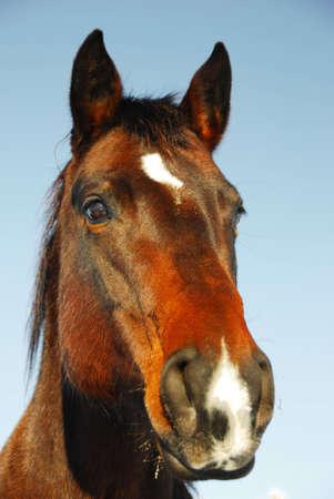 paardenhoofd: paard hoofd