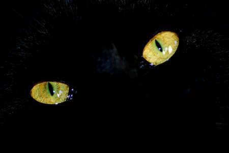 close up shot of a black cats eyes