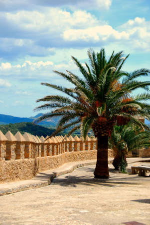 mallorca: a palm tree on an old castle in mallorca spain