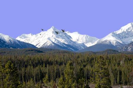 beautiful view on the coast mountain range canada bc