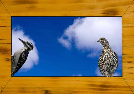 close up shoot of a rustical wooden picture frame with a woodpecker and a grouse Stock Photo