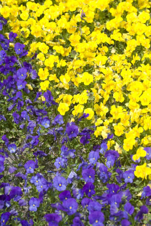 many different colored flowers together in a park in holland
