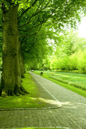 beautiful park with green trees in holland