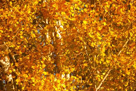 秋葉 写真素材