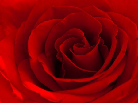 赤いバラをクローズ アップ