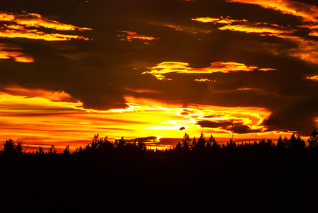 カナダ ブリティッシュ ・ コロンビア州の森林に沈む夕日