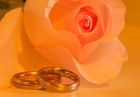 orange rose with wedding rings Stock Photo