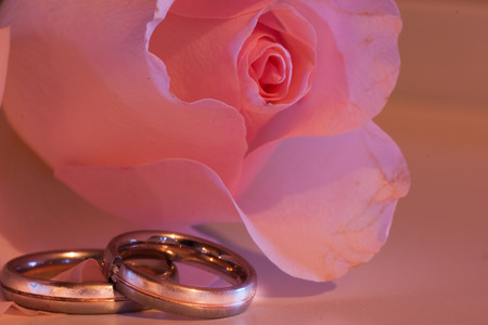 pink rose with wedding rings Stock Photo