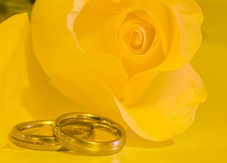 結婚指輪の黄色いバラ 写真素材