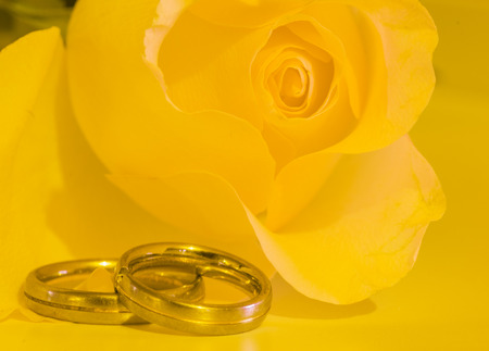 yellow rose with wedding rings Stock Photo