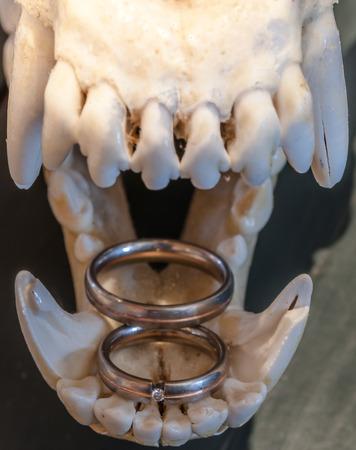 オオカミ スカル リング 写真素材