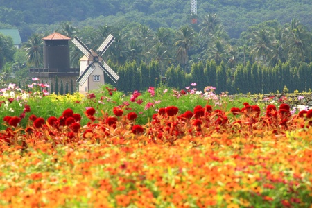 windmill netherlands style in beautiful flower garden : vineyard