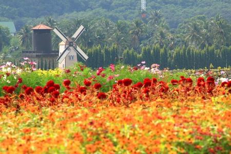 windmolen Nederland stijl in mooie bloementuin: wijngaard