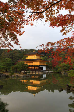 Golden temple in colorful leaf and tree in japan : Koyo Kinkakuji