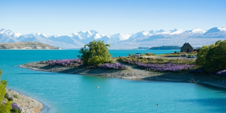 Beautiful landscape of flower garden, tree, lake and snow mountain at Lake Tekapo in South Island, New Zealand Stock Photo