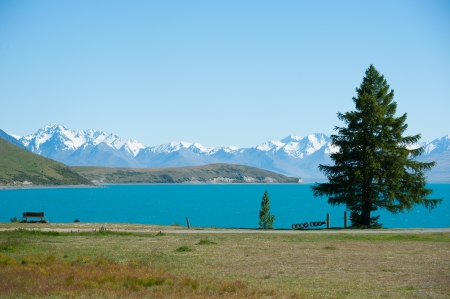 Beautiful landscape of tree, lake and snow mountain at Lake Tekapo in South Island, New Zealand Stock Photo - 17306499