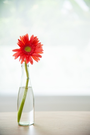 Beautiful of flower in the bottle photo