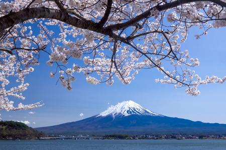 Beautiful view of Fujisan Mountain with cherry blossom in spring, Kawaguchiko lake, Japan