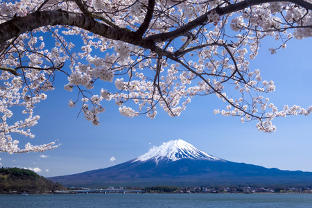Beautiful view of Fujisan Mountain with cherry blossom in spring, Kawaguchiko lake, Japan