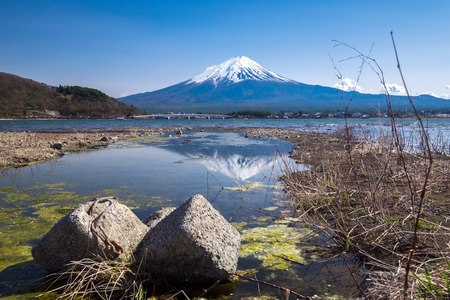 seaonal: Reflection of Fujisan Mountain with cherry blossom in spring, Kawaguchiko lake, Japan