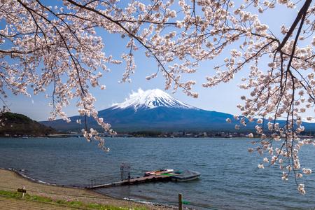cerezos en flor: Hermosa vista de la montaña Fujisan con flor de cerezo en primavera, lago Kawaguchiko, Japón Foto de archivo