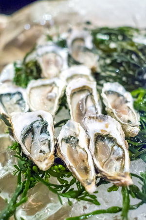 Group of Fresh opened oyster Stock Photo