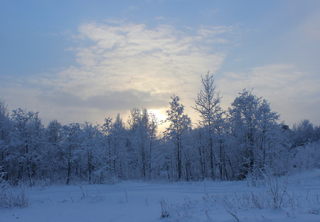 intensely: Winter forest after a snowfall on Christmas in the dead of winter.