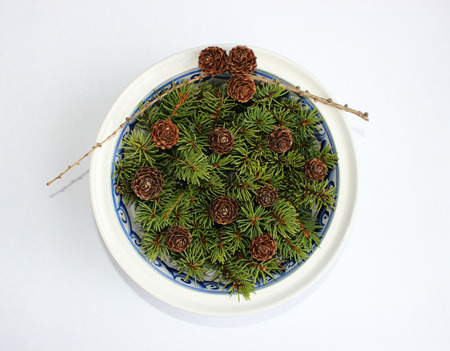 firry: The composition of the larch cones and twigs eaten in a soup plate on a white background.