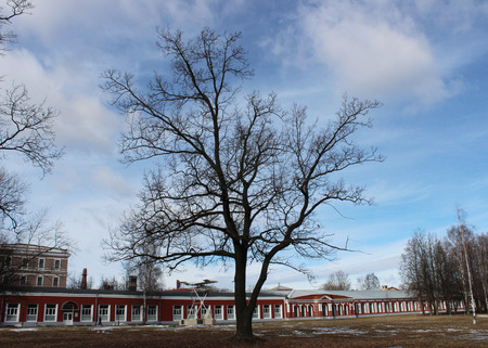 fagaceae: Landmark museum of the History of aviation engine and repair and oak in Gatchina, spring 2016. Editorial