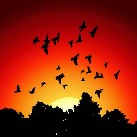 image from black silhouettes of a flock of doves (Columba livia) flying over the trees on sunset background.