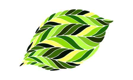 leaved: Image of a leaf in shades of green on a white background. Illustration