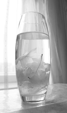 textura: Diversi foglie scheletrato di quercia (Quercus) in un vaso di vetro.